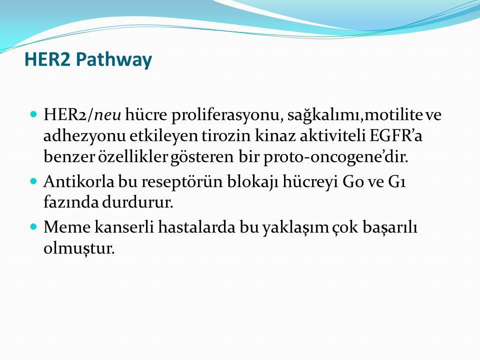 HER2 Pathway HER2/neu hücre proliferasyonu, sağkalımı,motilite ve adhezyonu etkileyen tirozin kinaz aktiviteli EGFR'a benzer özellikler gösteren bir proto-oncogene'dir.