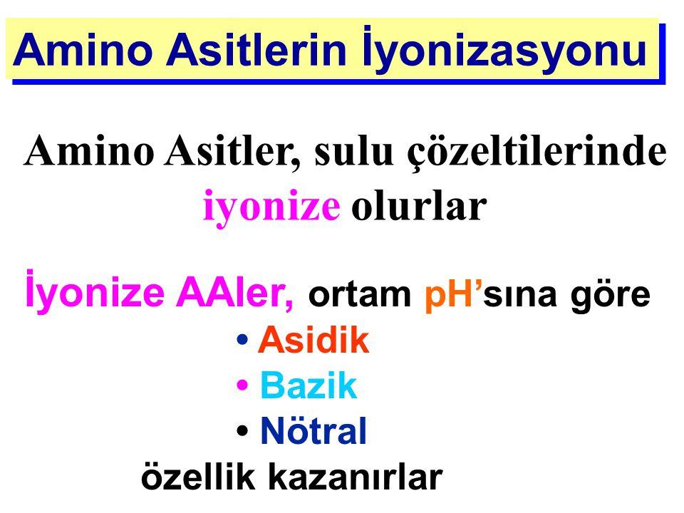 Amino Asitlerin İyonizasyonu İyonize AAler, ortam pH'sına göre Asidik Bazik Nötral özellik kazanırlar Amino Asitler, sulu çözeltilerinde iyonize olurl