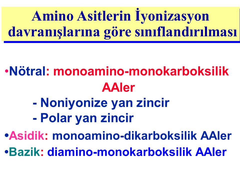 Nötral: monoamino-monokarboksilik AAler - Noniyonize yan zincir - Polar yan zincir Asidik: monoamino-dikarboksilik AAler Bazik: diamino-monokarboksili
