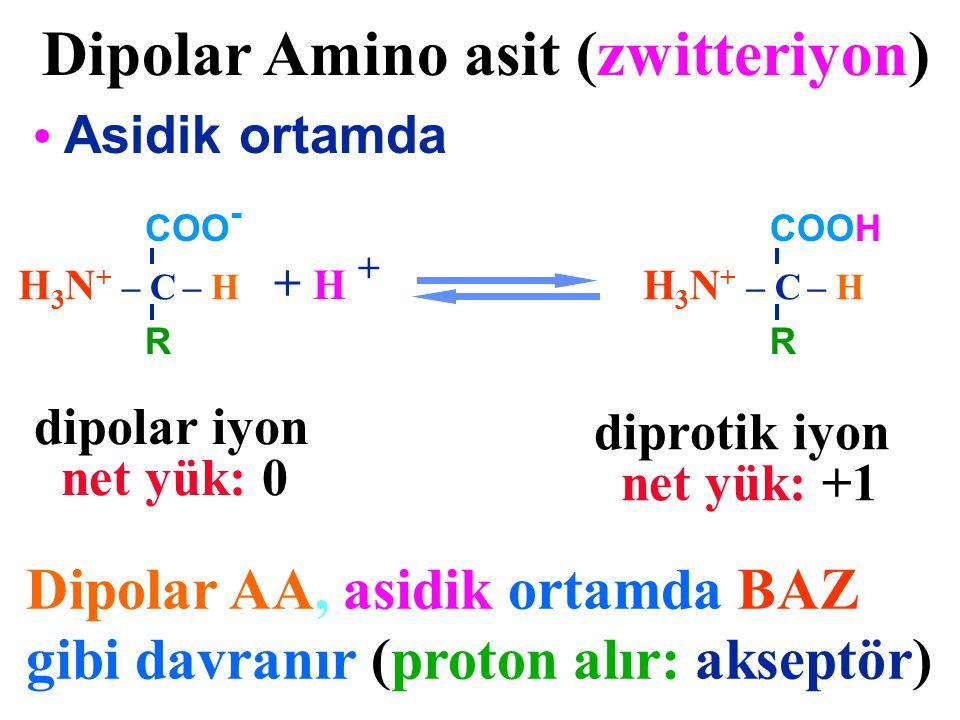 H 3 N + – C – H COOH R Dipolar Amino asit (zwitteriyon) Asidik ortamda + H + Dipolar AA, asidik ortamda BAZ gibi davranır (proton alır: akseptör) H 3