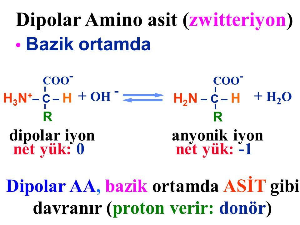 H 2 N – C – H COO - R Dipolar Amino asit (zwitteriyon) Bazik ortamda Dipolar AA, bazik ortamda ASİT gibi davranır (proton verir: donör) + OH - H 3 N +