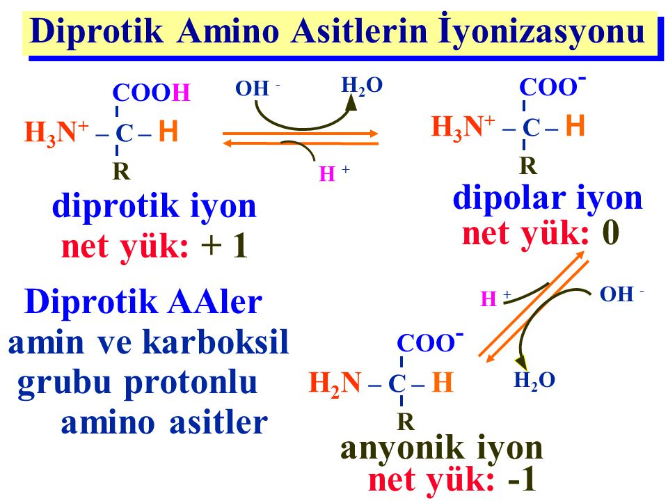 Diprotik Amino Asitlerin İyonizasyonu H 3 N + – C – H COO - R H 2 N – C – H COO - R OH - H2OH2O H + OH - H2OH2O H + Diprotik AAler amin ve karboksil g