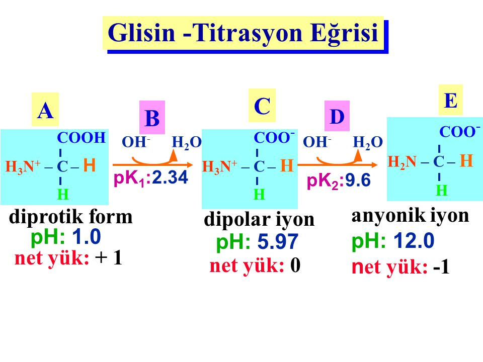 Glisin -Titrasyon Eğrisi H 3 N + – C – H COOH H diprotik form pH: 1.0 net yük: + 1 A H 3 N + – C – H COO - H dipolar iyon pH: 5.97 net yük: 0 C OH - H