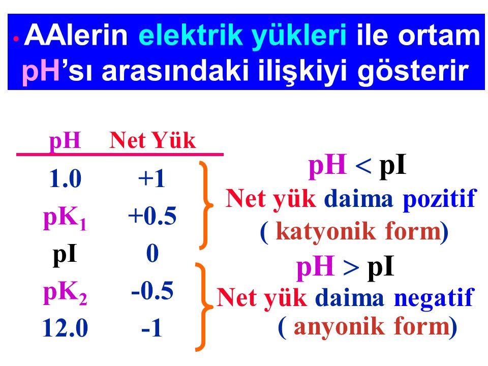 AAlerin elektrik yükleri ile ortam pH'sı arasındaki ilişkiyi gösterir pH  pI Net yük daima pozitif ( katyonik form) pH  pI Net yük daima negatif ( a