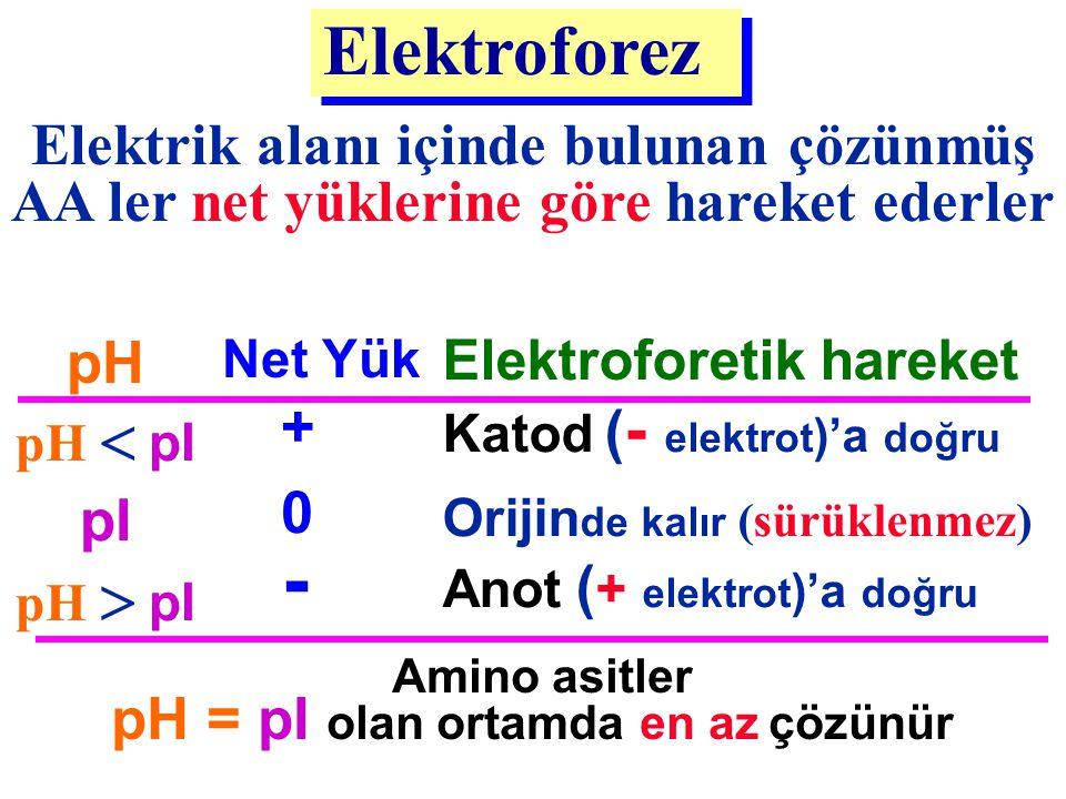 Elektrik alanı içinde bulunan çözünmüş AA ler net yüklerine göre hareket ederler Elektroforez Amino asitler pH = pI olan ortamda en az çözünür - 0 + N