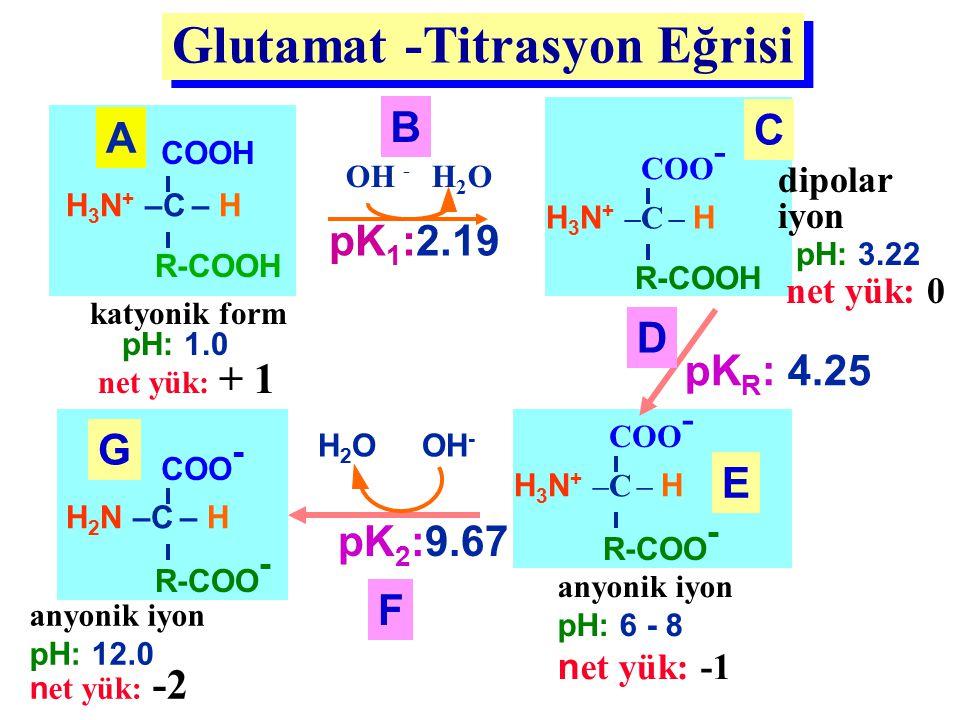 Glutamat -Titrasyon Eğrisi H 3 N + –C – H COOH R-COOH katyonik form pH: 1.0 net yük: + 1 A H 3 N + –C – H COO - R-COOH dipolar iyon pH: 3.22 net yük: