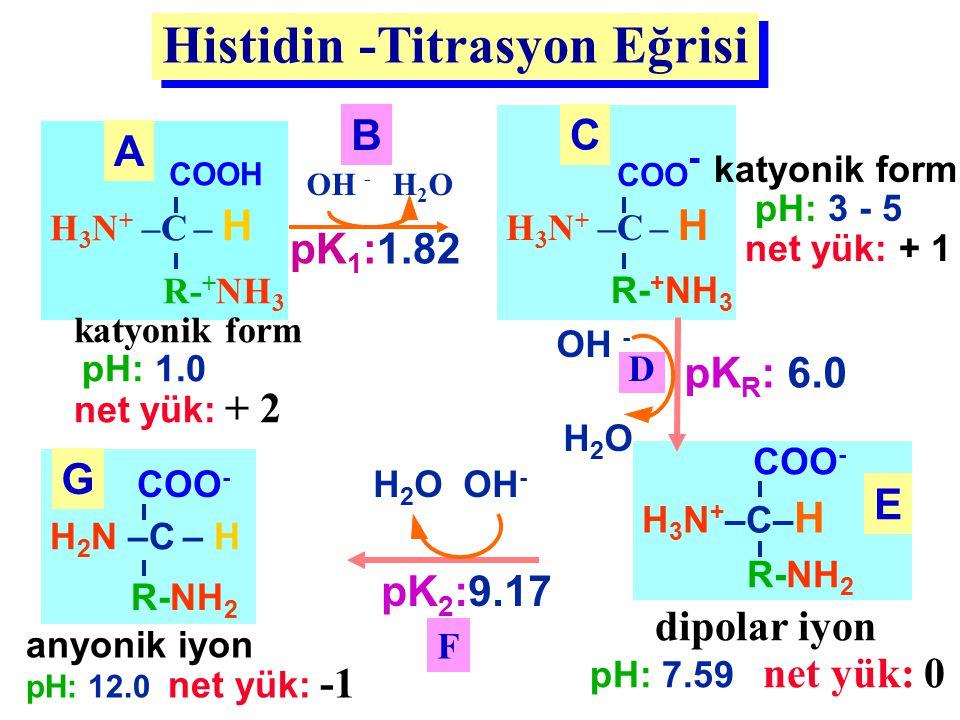 Histidin -Titrasyon Eğrisi H 3 N + –C – H COOH R- + NH 3 katyonik form pH: 1.0 net yük: + 2 A anyonik iyon pH: 12.0 net yük: -1 H 2 N –C – H COO - R-N
