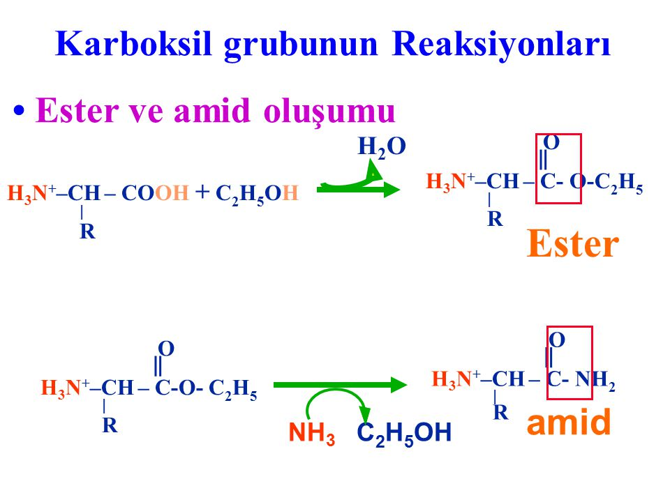Karboksil grubunun Reaksiyonları Ester ve amid oluşumu H 3 N + –CH – COOH + C 2 H 5 OH  R H2OH2O Ester O ‖ H 3 N + –CH – C- O-C 2 H 5  R NH 3 C 2 H
