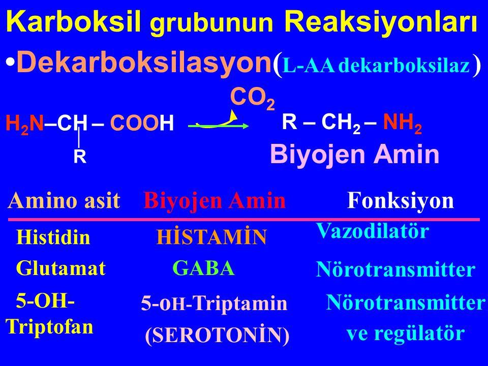 Karboksil grubunun Reaksiyonları Dekarboksilasyon ( L-AA dekarboksilaz ) H 2 N–CH – COOH  R CO 2 Amino asitBiyojen AminFonksiyon HistidinHİSTAMİN Vaz
