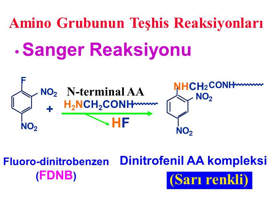 Amino Grubunun Teşhis Reaksiyonları F NO 2 2 NHCH 2 CONH NO 2 2 Sanger Reaksiyonu Fluoro-dinitrobenzen ( FDNB ) N-terminal AA + H 2 NCH 2 CONH HFHF Di