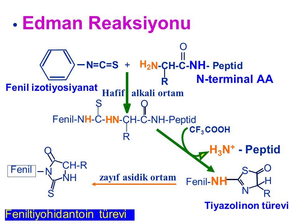 N=C=S + Feniltiyohidantoin türevi NH CH-R N O S Fenil Hafif alkali ortam zayıf asidik ortam H 3 N + - Peptid CF 3 COOH N S O R H Fenil- NH Tiyazolinon