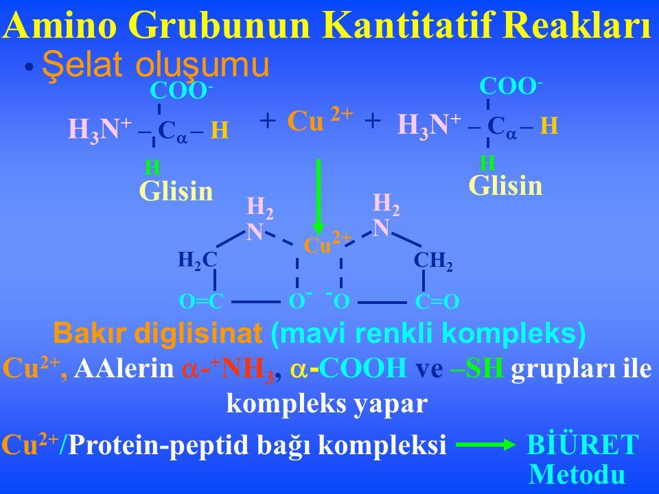 Amino Grubunun Kantitatif Reakları Şelat oluşumu H 2 N CH 2 -O-O C=O H 2 N Cu 2+ H2CH2C O=CO-O- H 3 N + – C  – H H COO - H 3 N + – C  – H H COO - +