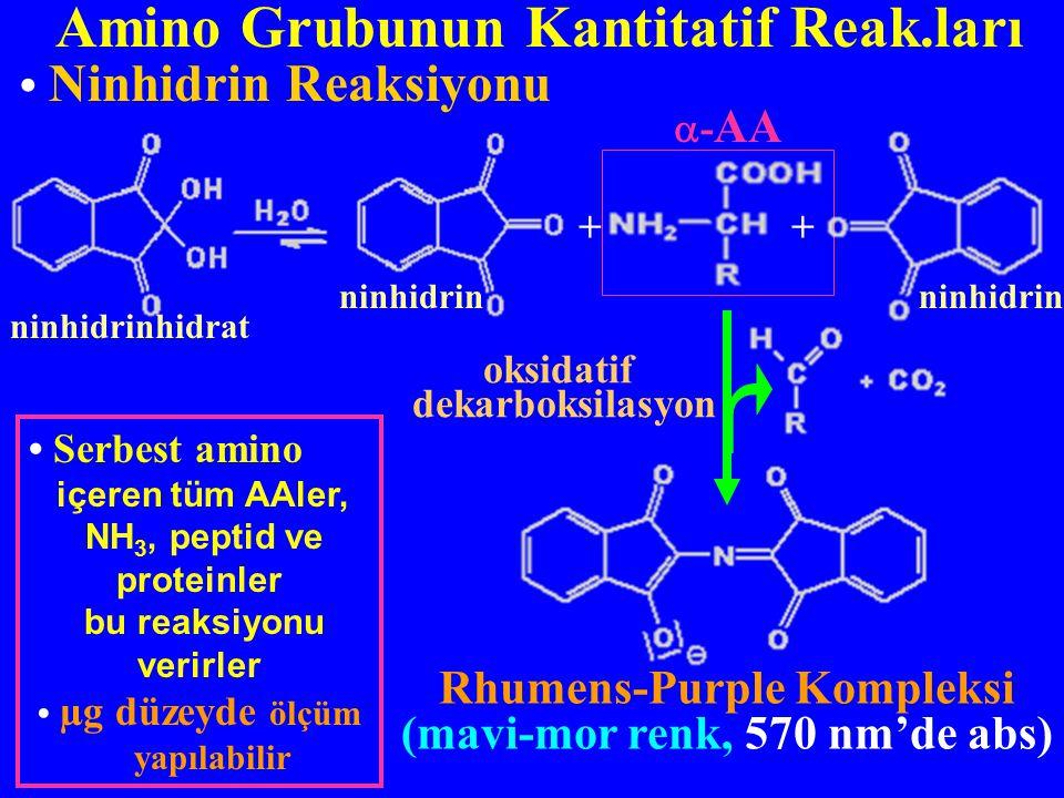 Amino Grubunun Kantitatif Reak.ları Ninhidrin Reaksiyonu Rhumens-Purple Kompleksi (mavi-mor renk, 570 nm'de abs) oksidatif dekarboksilasyon Serbest am