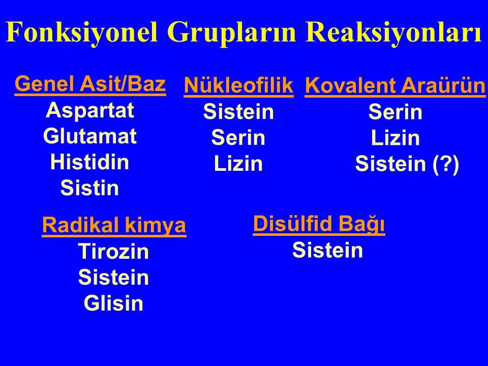 Genel Asit/Baz Aspartat Glutamat Histidin Sistin Nükleofilik Sistein Serin Lizin Radikal kimya Tirozin Sistein Glisin Disülfid Bağı Sistein Kovalent A