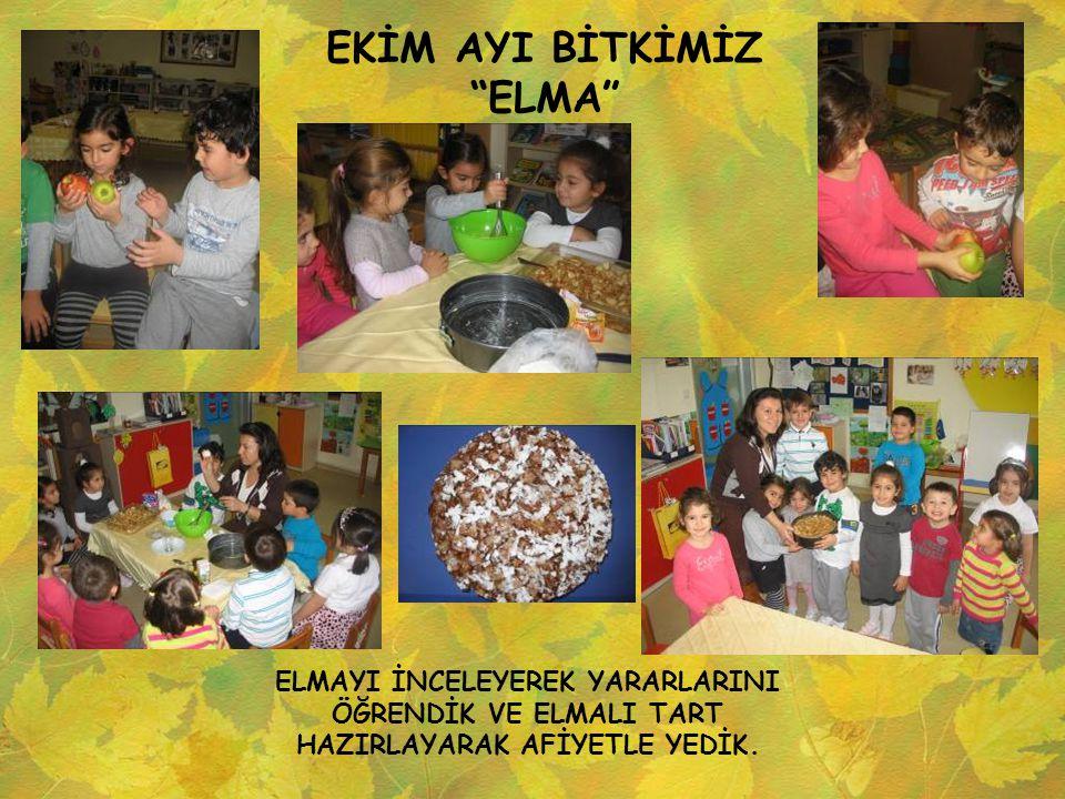 """EKİM AYI BİTKİMİZ """"ELMA"""" ELMAYI İNCELEYEREK YARARLARINI ÖĞRENDİK VE ELMALI TART HAZIRLAYARAK AFİYETLE YEDİK."""