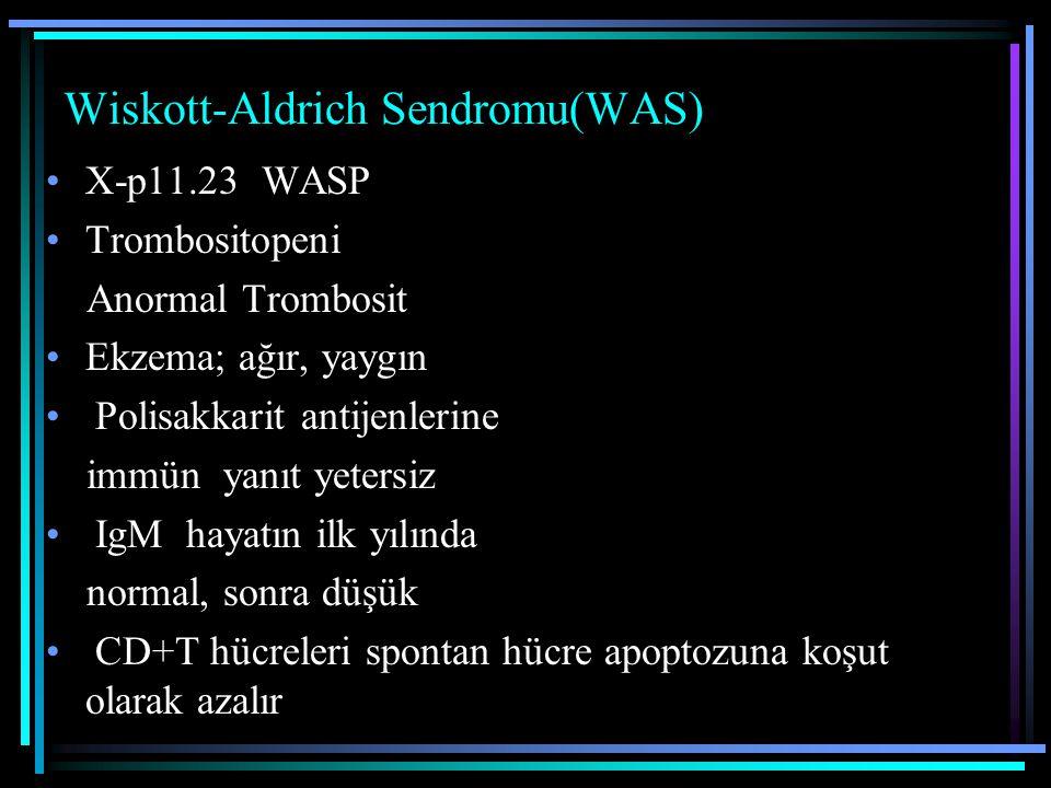 Wiskott-Aldrich Sendromu(WAS) X-p11.23 WASP Trombositopeni Anormal Trombosit Ekzema; ağır, yaygın Polisakkarit antijenlerine immün yanıt yetersiz IgM