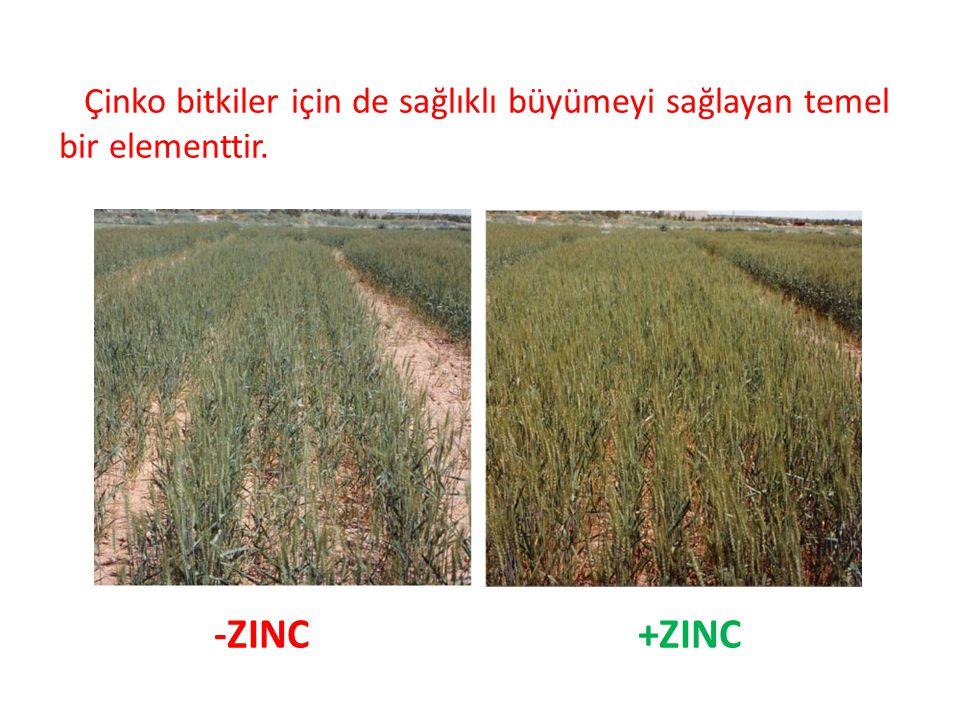 Çinko bitkiler için de sağlıklı büyümeyi sağlayan temel bir elementtir. -ZINC +ZINC