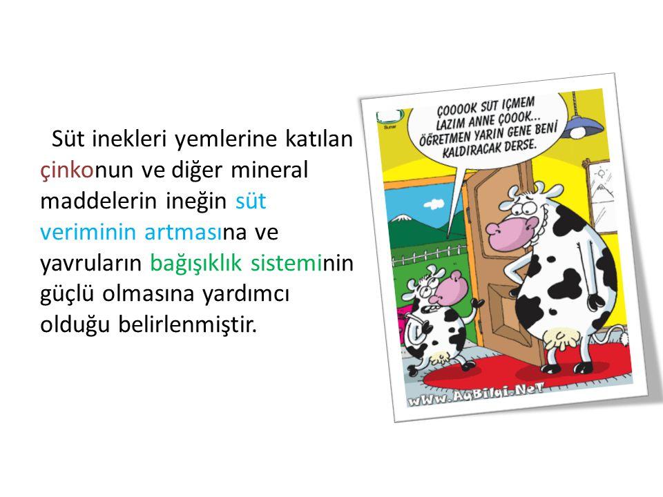 Süt inekleri yemlerine katılan çinkonun ve diğer mineral maddelerin ineğin süt veriminin artmasına ve yavruların bağışıklık sisteminin güçlü olmasına yardımcı olduğu belirlenmiştir.
