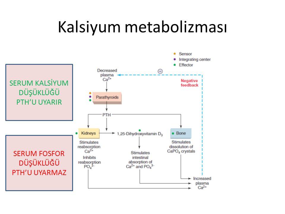 Kalsiyum metabolizması SERUM KALSİYUM DÜŞÜKLÜĞÜ PTH'U UYARIR SERUM FOSFOR DÜŞÜKLÜĞÜ PTH'U UYARMAZ