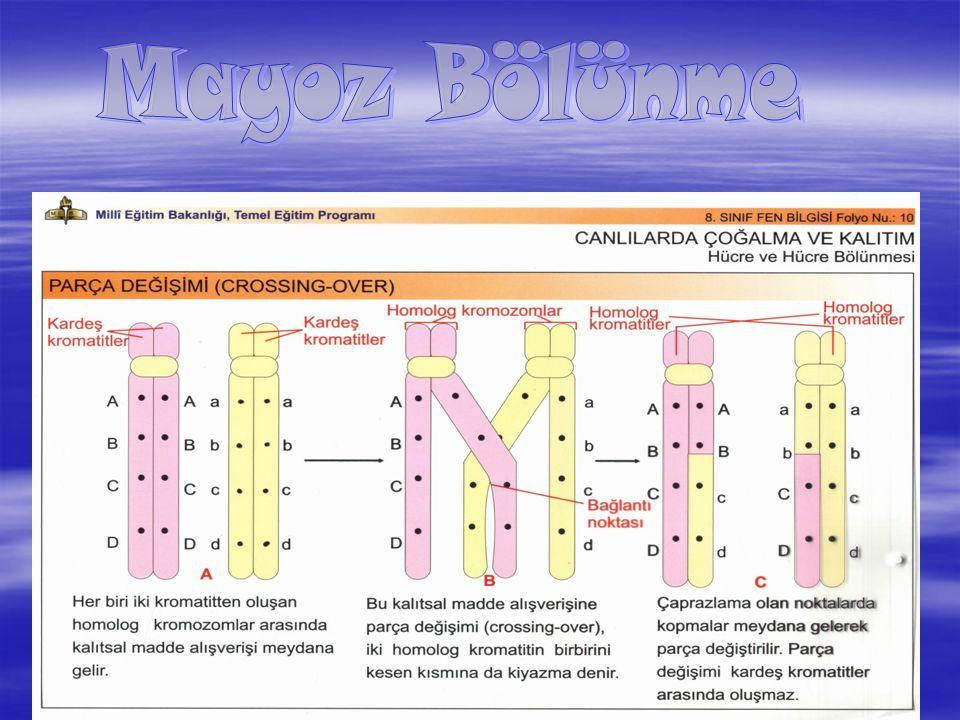 5  Kromozom Sayısı Yarıya iner 2n n n n n