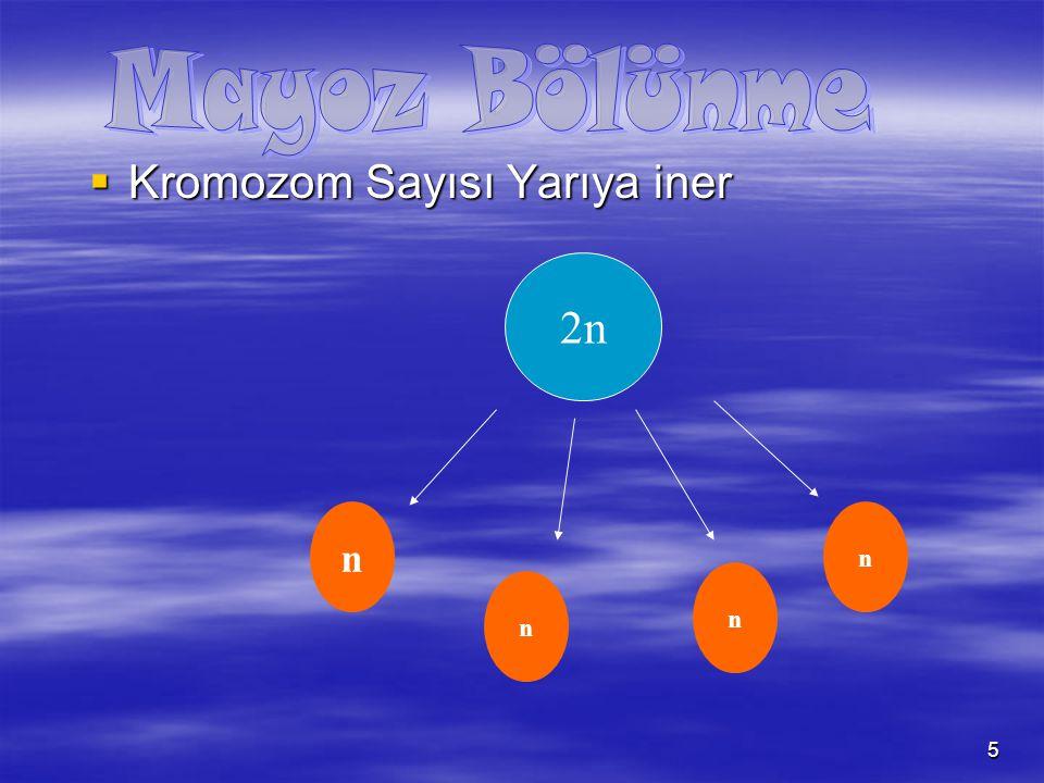 6 nn n n  Bir hücreden 4 yeni hücre oluşur 2n