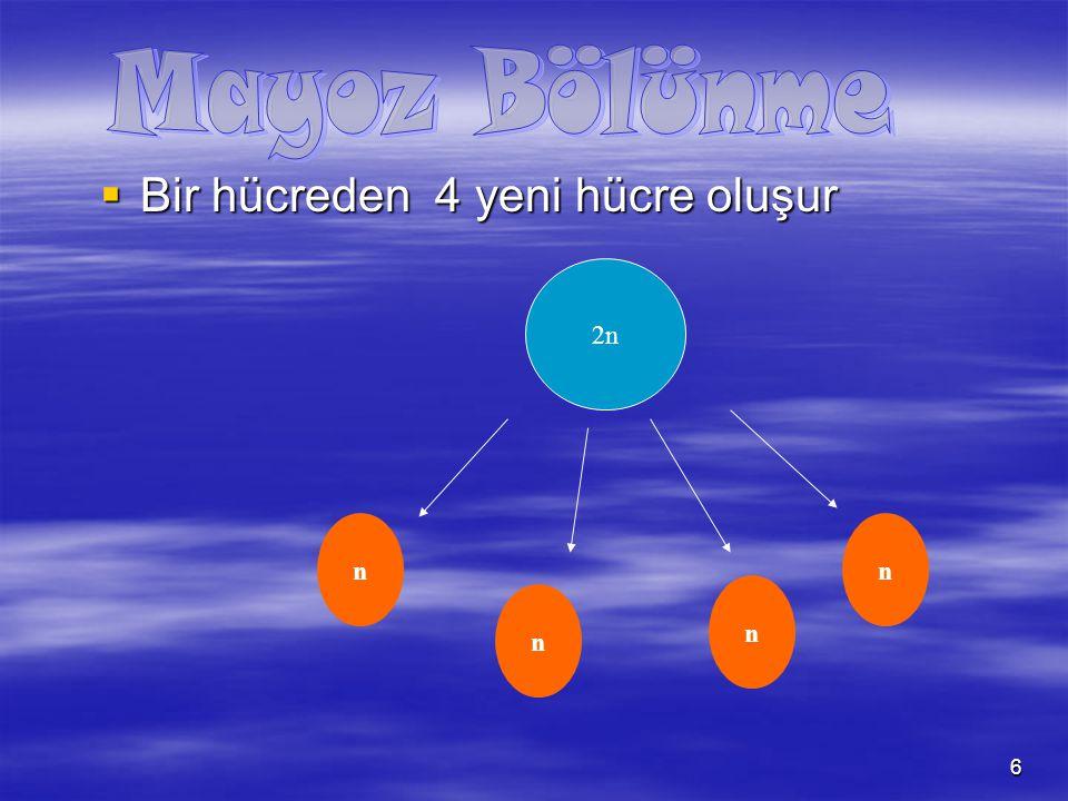 7  Yalnız 2n kromozomlu hücreler mayoz gerçekleştirir.( Eşey ana hücreleri,Zigot) 2n n nn n