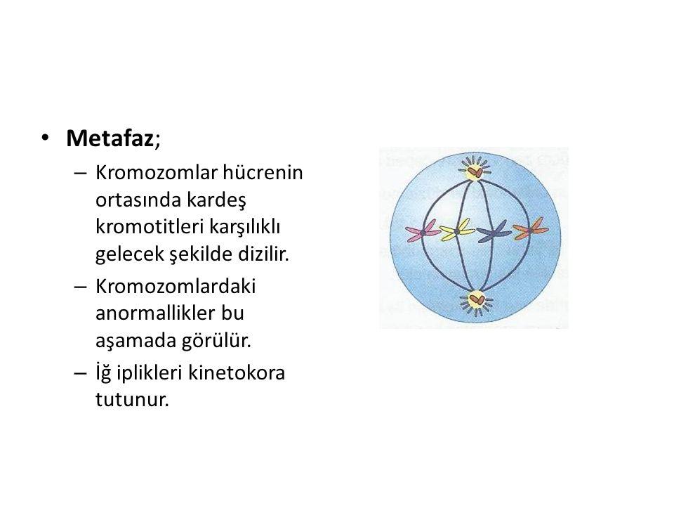 Metafaz; – Kromozomlar hücrenin ortasında kardeş kromotitleri karşılıklı gelecek şekilde dizilir. – Kromozomlardaki anormallikler bu aşamada görülür.