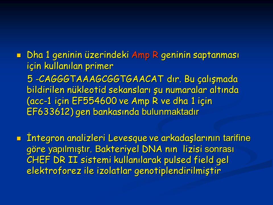 Dha 1 geninin üzerindeki Amp R geninin saptanması için kullanılan primer Dha 1 geninin üzerindeki Amp R geninin saptanması için kullanılan primer 5 -CAGGGTAAAGCGGTGAACAT dır.