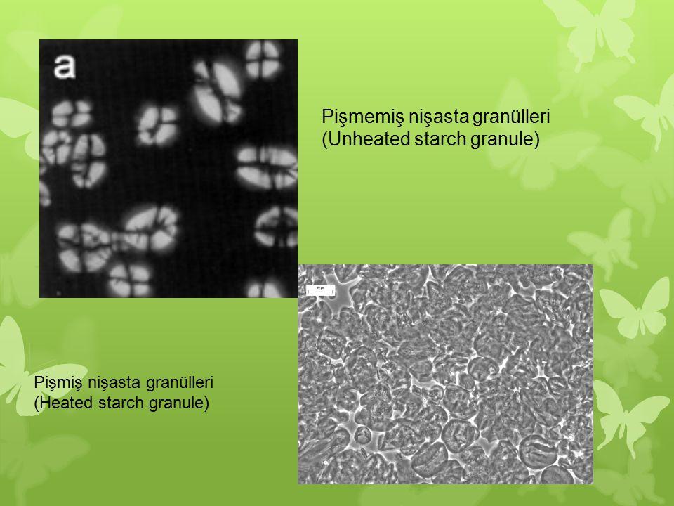 Pişmemiş nişasta granülleri (Unheated starch granule) Pişmiş nişasta granülleri (Heated starch granule)