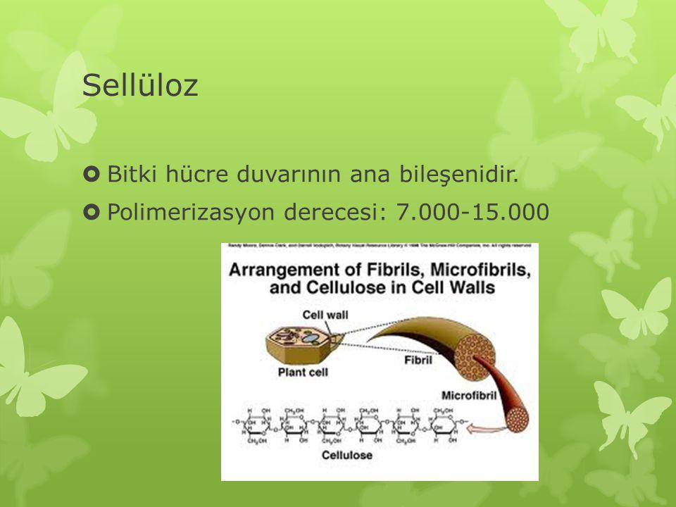Sellüloz  Bitki hücre duvarının ana bileşenidir.  Polimerizasyon derecesi: 7.000-15.000