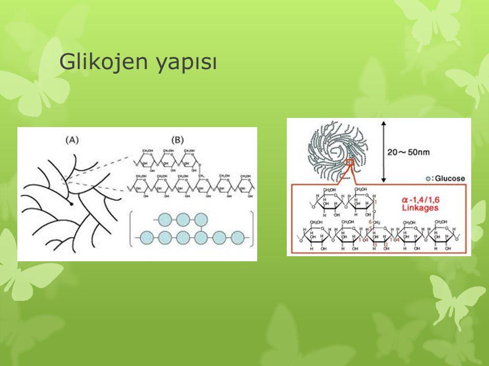 Glikojen yapısı