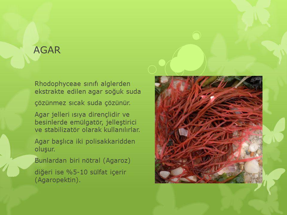 AGAR Rhodophyceae sınıfı alglerden ekstrakte edilen agar soğuk suda çözünmez sıcak suda çözünür.