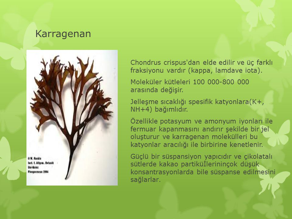 Karragenan Chondrus crispus'dan elde edilir ve üç farklı fraksiyonu vardır (kappa, lamdave iota). Moleküler kütleleri 100 000-800 000 arasında değişir