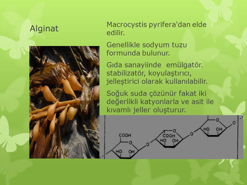 Alginat Macrocystis pyrifera'dan elde edilir. Genellikle sodyum tuzu formunda bulunur. Gıda sanayiinde emülgatör. stabilizatör, koyulaştırıcı, jelleşt