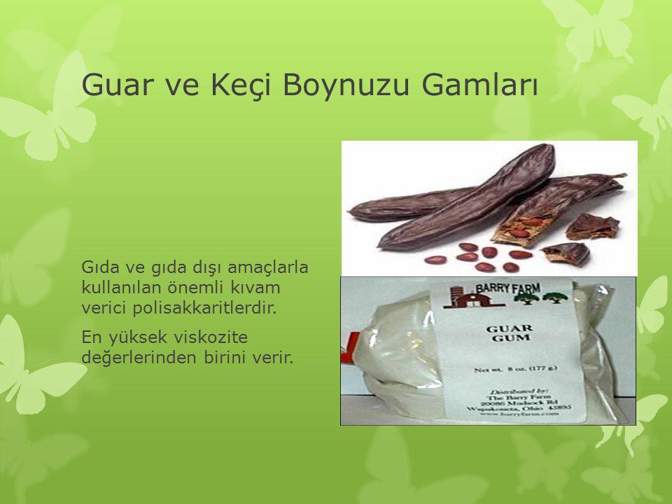 Guar ve Keçi Boynuzu Gamları Gıda ve gıda dışı amaçlarla kullanılan önemli kıvam verici polisakkaritlerdir.