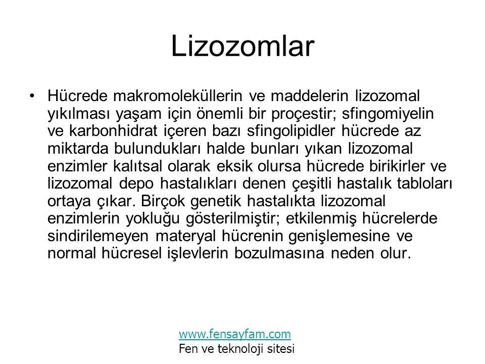 Lizozomlar Hücrede makromoleküllerin ve maddelerin lizozomal yıkılması yaşam için önemli bir proçestir; sfingomiyelin ve karbonhidrat içeren bazı sfin