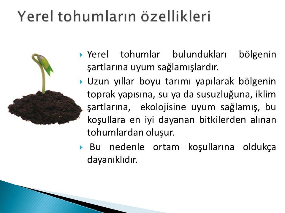  Yerel tohumlar bulundukları bölgenin şartlarına uyum sağlamışlardır.  Uzun yıllar boyu tarımı yapılarak bölgenin toprak yapısına, su ya da susuzluğ