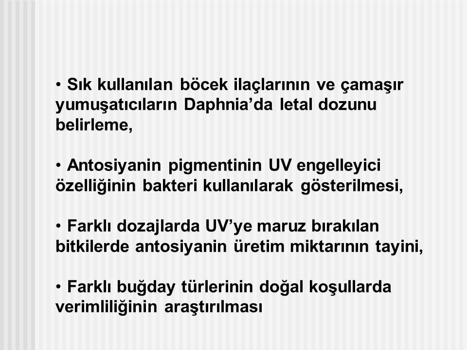 Sık kullanılan böcek ilaçlarının ve çamaşır yumuşatıcıların Daphnia'da letal dozunu belirleme, Antosiyanin pigmentinin UV engelleyici özelliğinin bakt