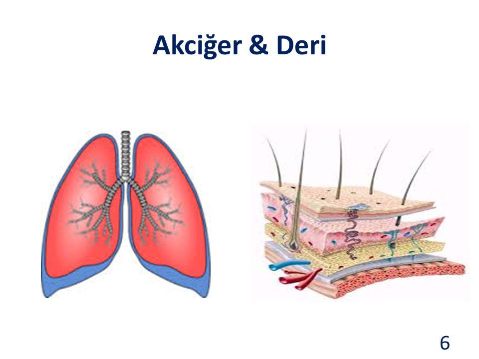 Akciğer & Deri 6