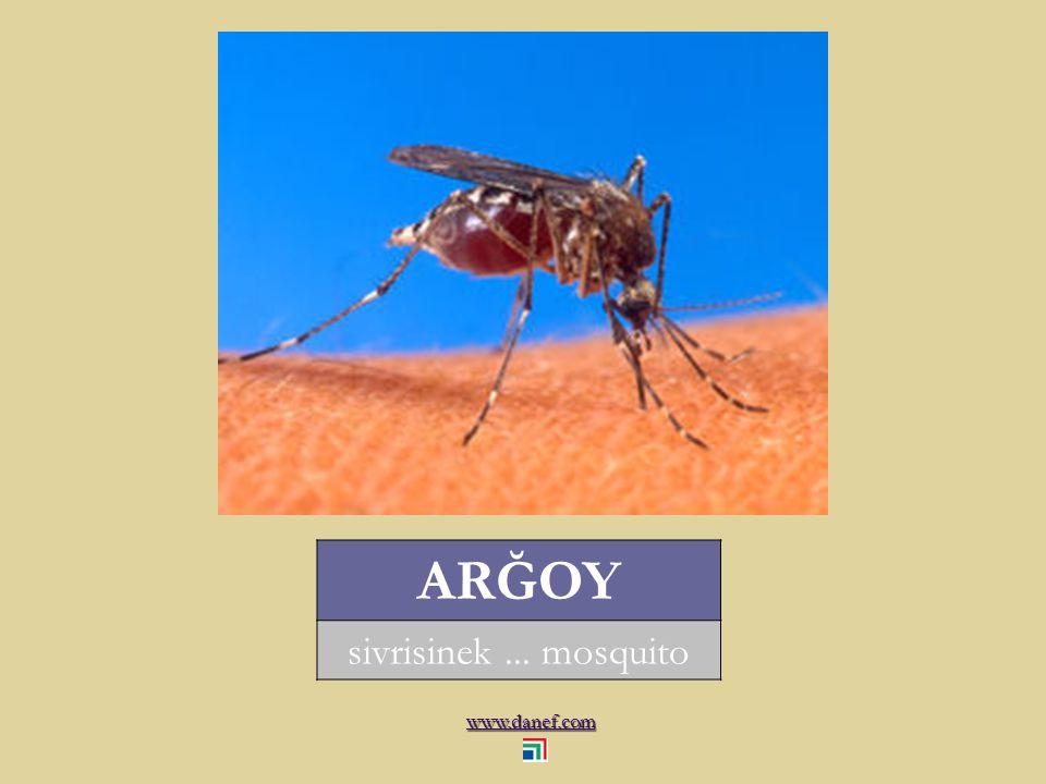 www.danef.com ARĞOY sivrisinek... mosquito