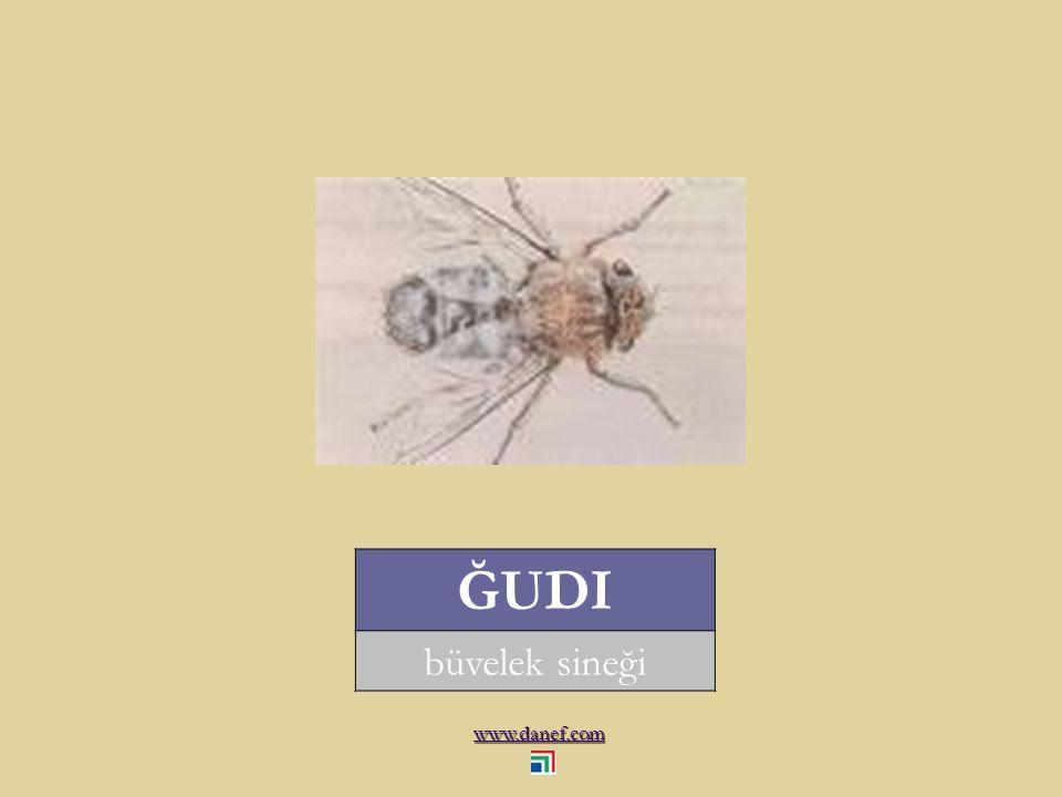 www.danef.com ĞOÁNEDES tahtakurusu... bug