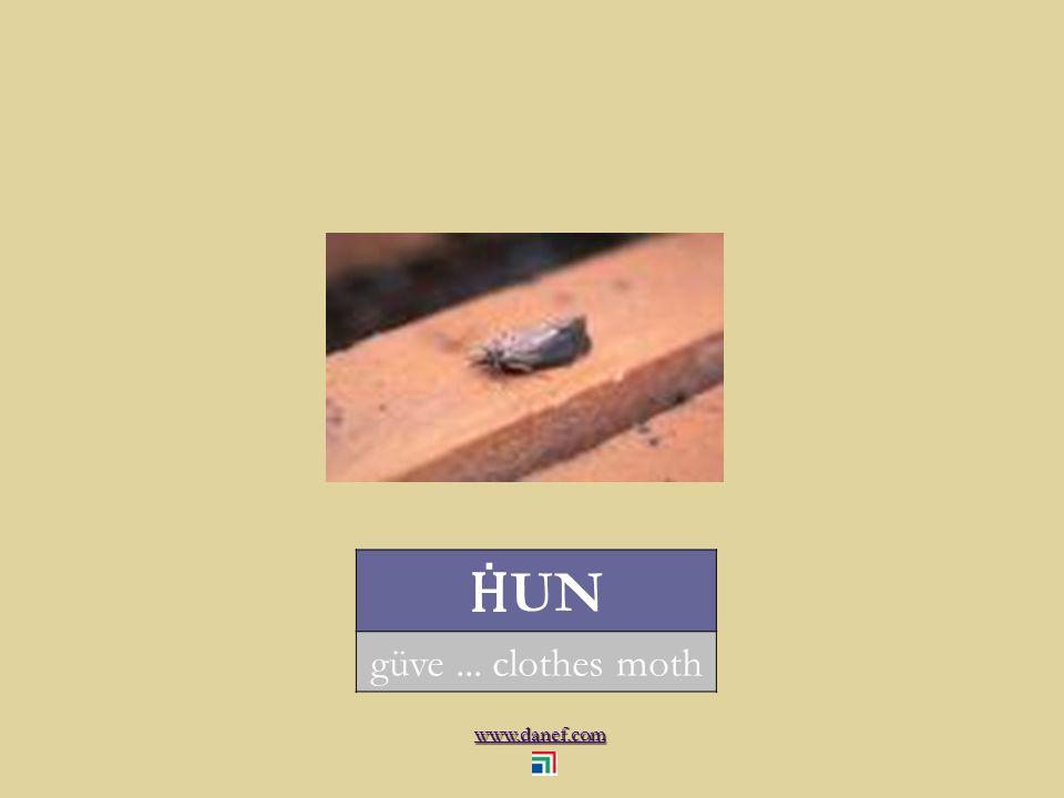www.danef.com CINEP Ḣ OTER midye... mussel