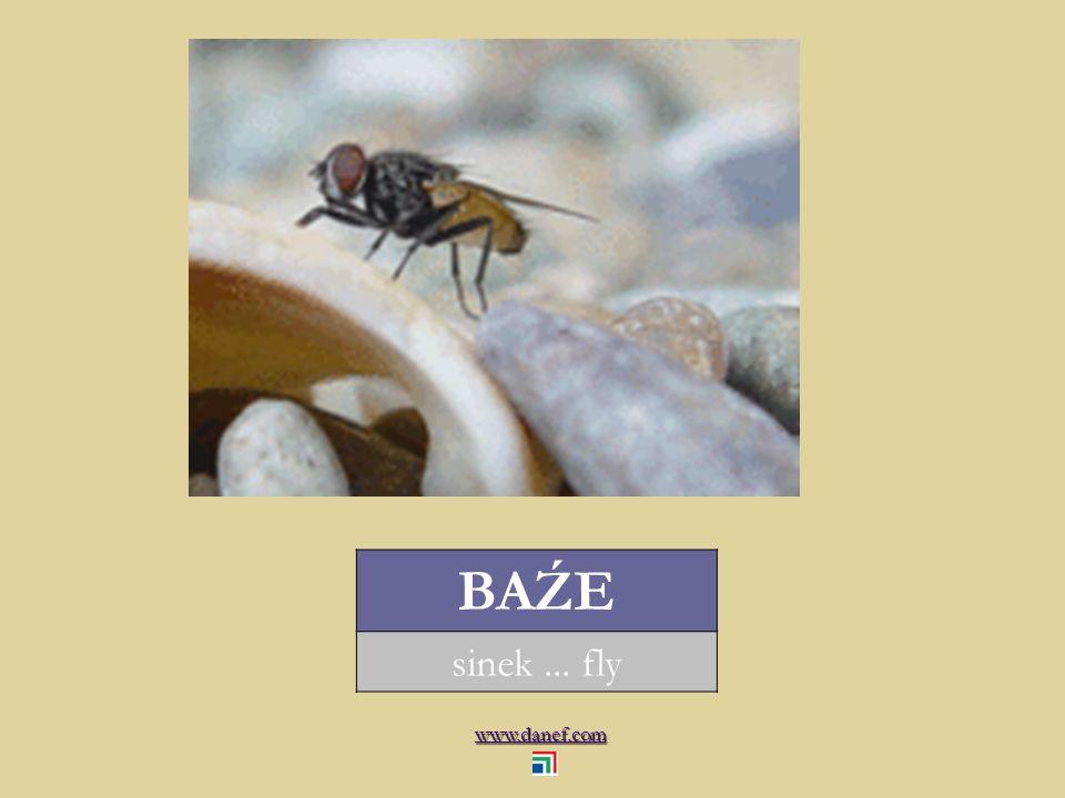 www.danef.com BAŹE sinek... fly