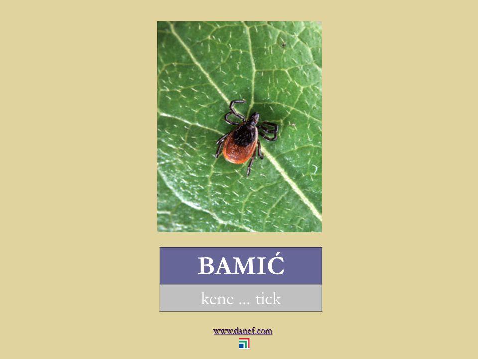 www.danef.com BAMIĆ kene... tick
