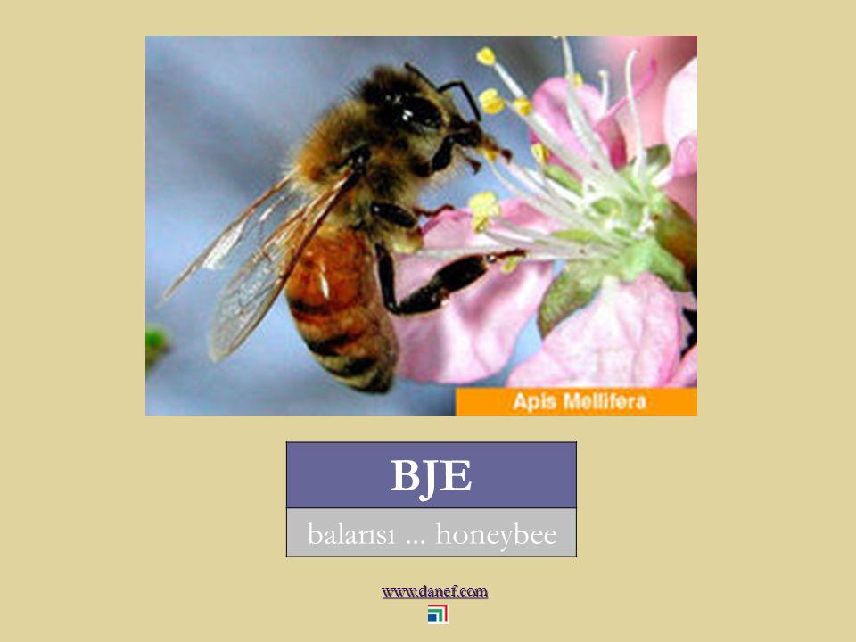 www.danef.com BJE balarısı... honeybee