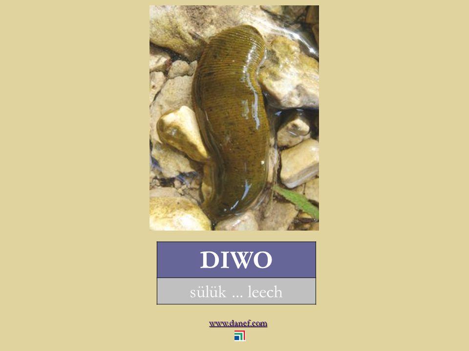 www.danef.com FIKARDE sığırlarda deri altı kurtçuğu