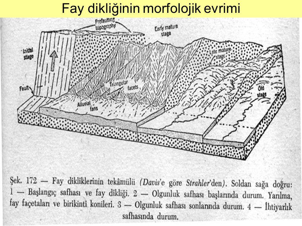 Fay dikliğinin morfolojik evrimi