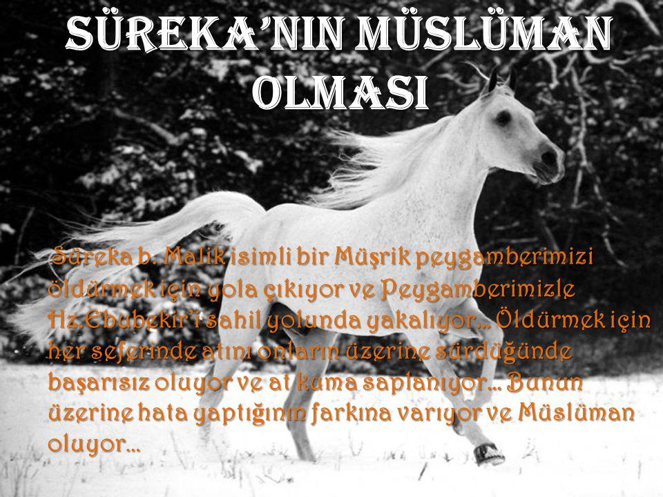 SÜREKA'NIN MÜSLÜMAN OLMASI S üreka b. Malik isimli bir Müşrik peygamberimizi öldürmek için yola çıkıyor ve Peygamberimizle Hz.Ebubekir'i sahil yolunda