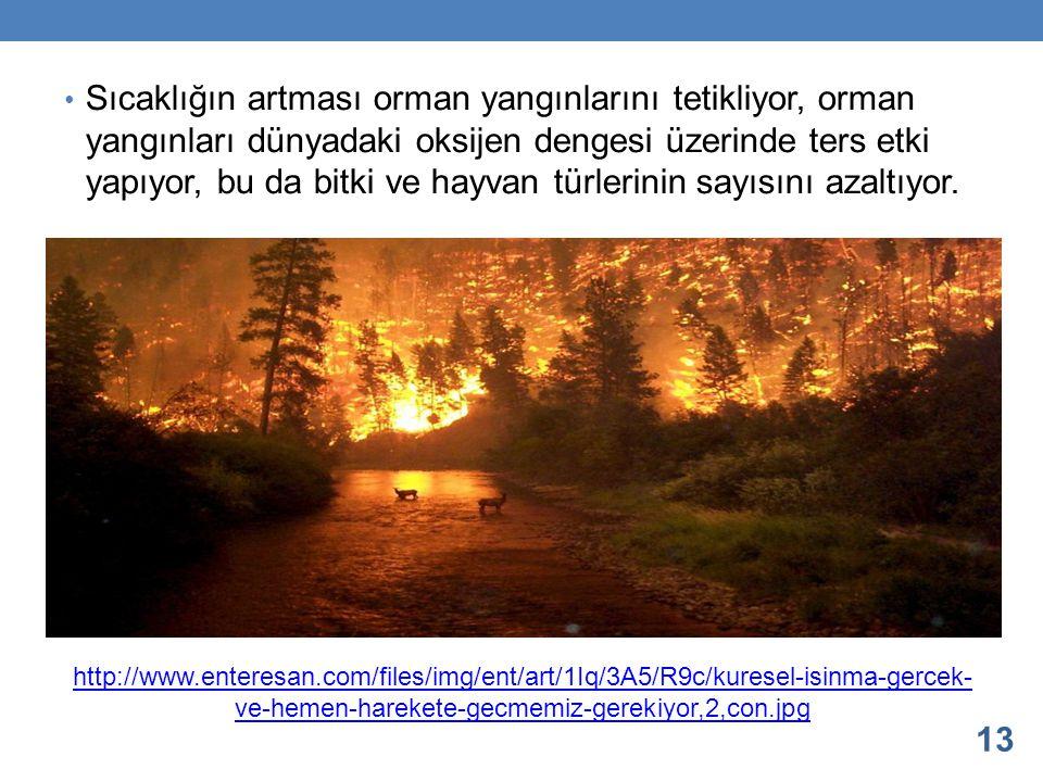Sıcaklığın artması orman yangınlarını tetikliyor, orman yangınları dünyadaki oksijen dengesi üzerinde ters etki yapıyor, bu da bitki ve hayvan türleri