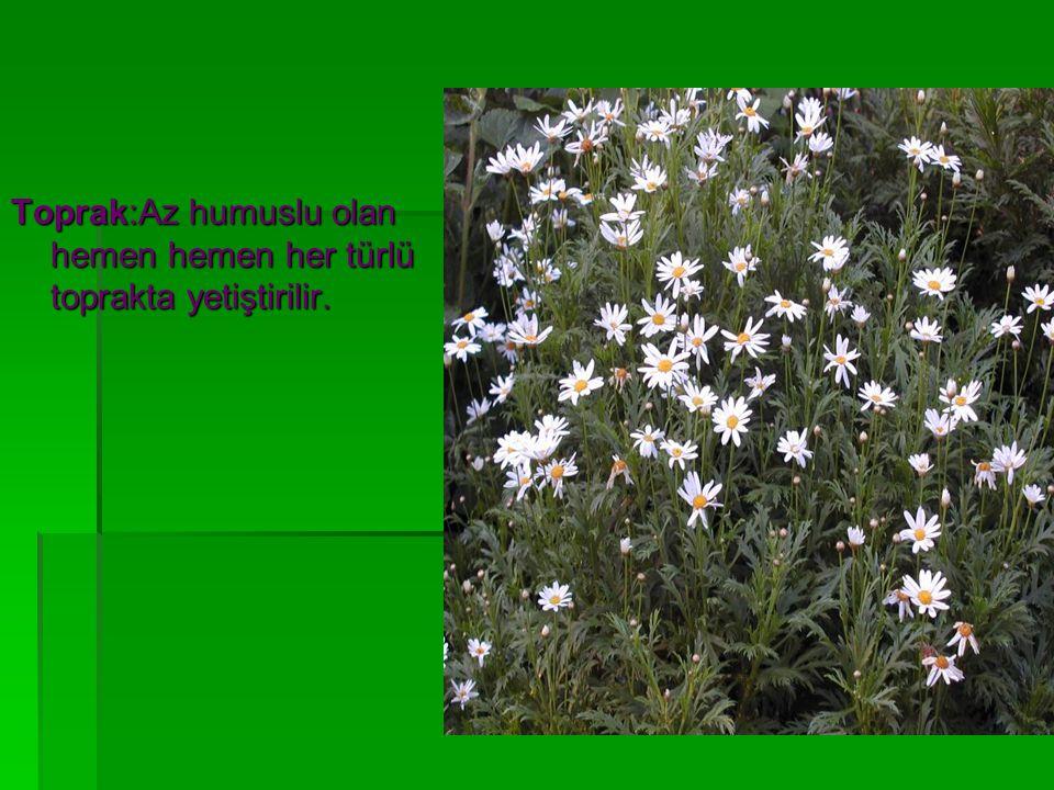 Toprak:Az humuslu olan hemen hemen her türlü toprakta yetiştirilir.